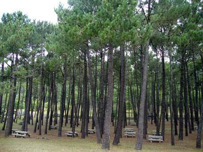 Playa de Balarés, pinar en donde estuvo situada a mina de Titania